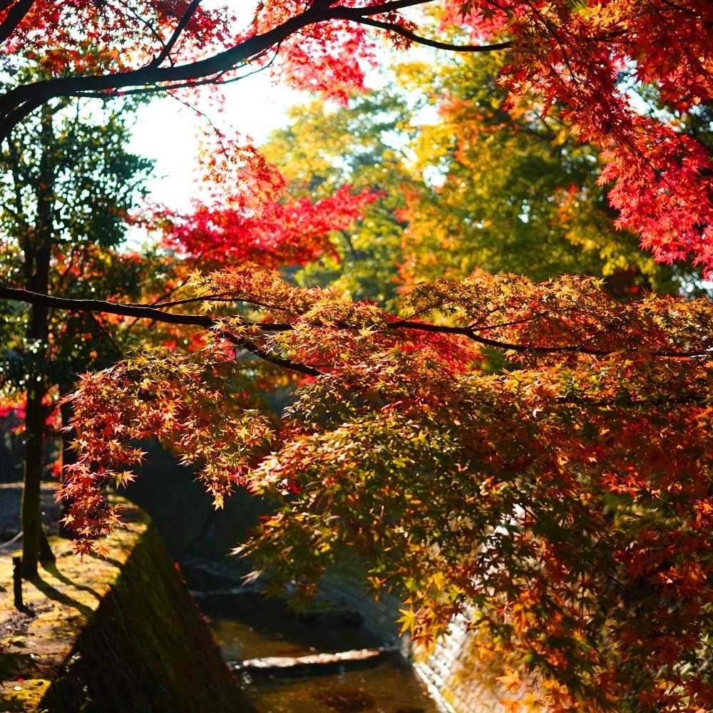 Autumn - AKI-