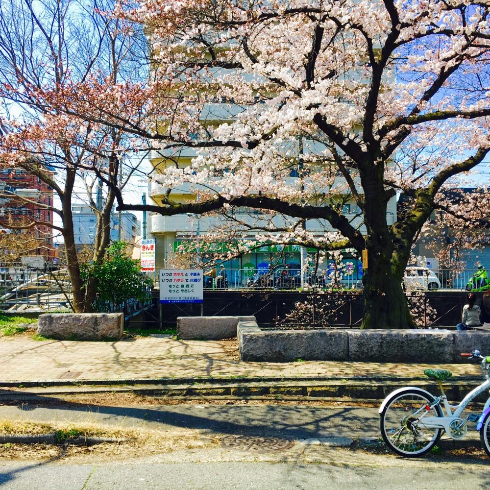 Spring - 春