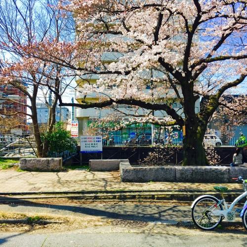 Spring - HARU -